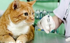 Выездной пункт вакцинации домашних животных приедет в Вороновское