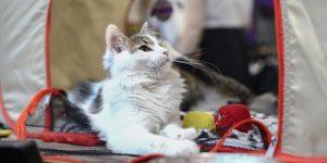 Ветеринары рассказали как подготовить питомца к поездке на дачу
