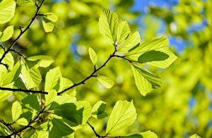 Более 8000 заявок подали жители столицы на участие в проекте «Наше дерево»
