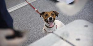 В Вороновском пройдёт вакцинация домашних животных от бешенства