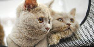 Выездной пункт вакцинации домашних животных будет работать в Вороновском